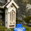 Butterfly Feeder in Use