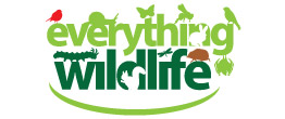 Everything Wildlife
